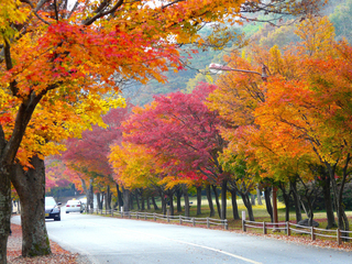 Places to see fall foliage in Kansas City