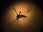 Still not a lot of facts known about Zika virus