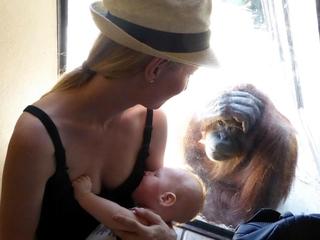Breast-feeding mom shares moment with orangutan