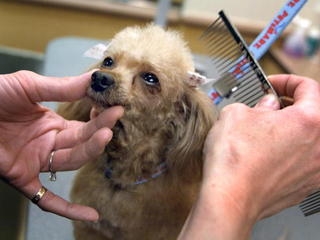 Americans spent $60B on pet services in 2015