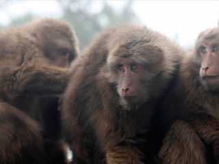 19 lab monkeys escape South Carolina compound