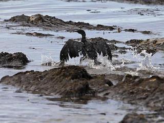 Major oil spill from California pipeline