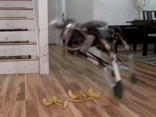 Banana peels won't stop the robots