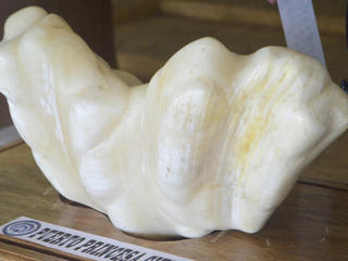 75-pound pearl found in Philippines