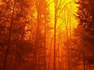 $6 million wildfire relief fund created by feds