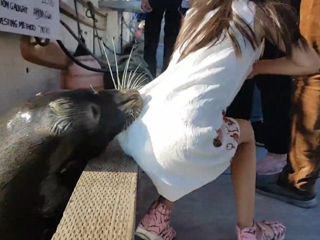Family of girl grabbed by sea lion deny trying to feed it