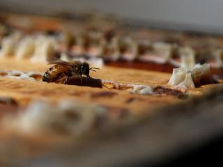 Bee, wasp venom shortage concerns doctors