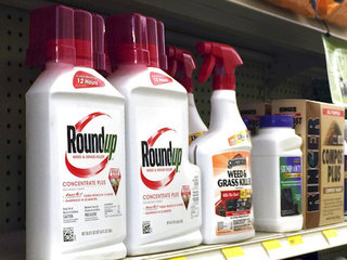 Roundup ingredient listed as cancerous in Calif.