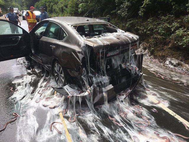 Overturned eel truck leaves slime all over OR  highway