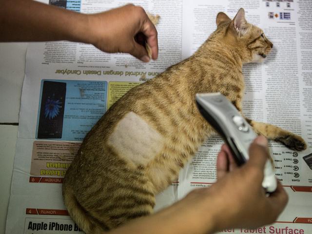 Shaving Cats