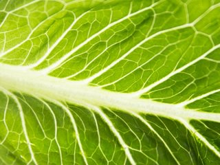 CDC says to avoid eating romaine lettuce